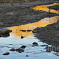 Sunset Reflected In Stream, Arizona by John Shaw