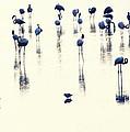 Swan Lake by Anusha Hewage