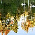 Swan Lake by Nian Chen