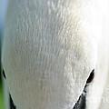 Swan by Mats Silvan