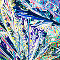 Tartaric Acid Crystals In Polarized Light by Stephan Pietzko