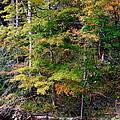 Tennessee Autumn Stream by Carol Groenen