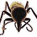 Termite Soldier by David M. Phillips