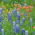 Texas Wildflowers by Lynn Bauer