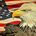 The American Eagle by Steve McKinzie