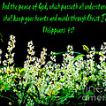 The Bible Philippians 4 by Ron  Tackett