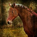 The Horse Portrait by Angel  Tarantella