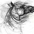 The Horse Sketch by Angel Ciesniarska