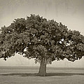 The Lonely Tree by Charles Beeler