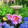 The Magic Garden by Dora Sofia Caputo Photographic Design and Fine Art