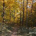 The Path by William Norton