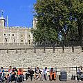 The Tower Of London by Julia Gavin