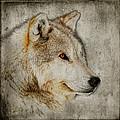 The Wolf by Steve McKinzie
