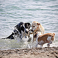 Three Dogs Playing On Beach by Elena Elisseeva