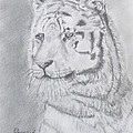 Tiger Watching by Gilbert Pennison