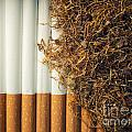 Tobacco by Sinisa Botas