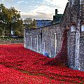 Tower Of London Poppies by Chris Day