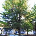 Tree 1 by Jeelan Clark