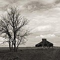 2 Tree Barn by Ransom Williams