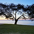 Tree By The Bay by Kelley King