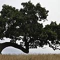 Tree Of Life by Leto Covington