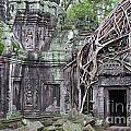 Tree Roots On Ruins At Angkor Wat by Sami Sarkis