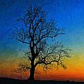 Tree Skeleton by David Pringle