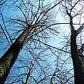 2 Trees by Chloe Shackelton