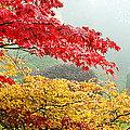 Trees In A Garden, Butchart Gardens by Panoramic Images