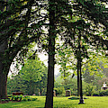 Trees In A Park, Adams Park, Wheaton by Panoramic Images