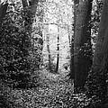 Trees by Jenny Potter