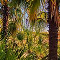 Tropical Forest Palm Trees In Sunlight by Alex Grichenko