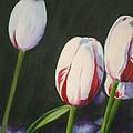 Tulips by Sarah Vandenbusch