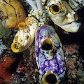 Tunicates by Andrew J Martinez
