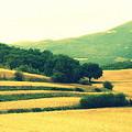 Tuscany  by Irina Davis