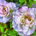 Two White Roses by Barbara Snyder