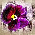 Vibrant Violet  by Ellen Cannon