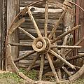 Wagon Wheel by Terry Fleckney