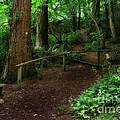 Haunted Walking Trail In Wales by Doc Braham