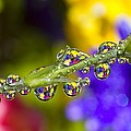 Water Drops On A Flower Stem by Craig Tuttle