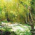 Waterfall In Rainforest by Atiketta Sangasaeng