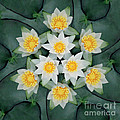 Waterlily Mandala by Susan Bloom