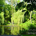 Weeping Willow Pond by Lyric Lucas