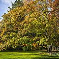 Westonbirt Arboretum by Amanda Elwell