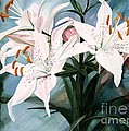 White Lilies by Laurie Rohner