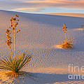White Sands National Monument by Henk Meijer Photography