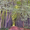 Whitwell Wood by Andrew Barke