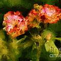 Wild Rose by Dariusz Gudowicz