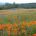 Wildflower Wonderland 10 by Lynn Bauer