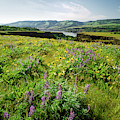 Wildflowers In A Field, Columbia River by Panoramic Images